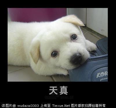 发可爱动物啦,好萌啊! 用qq邮箱阅读空间订阅 〆大爱.
